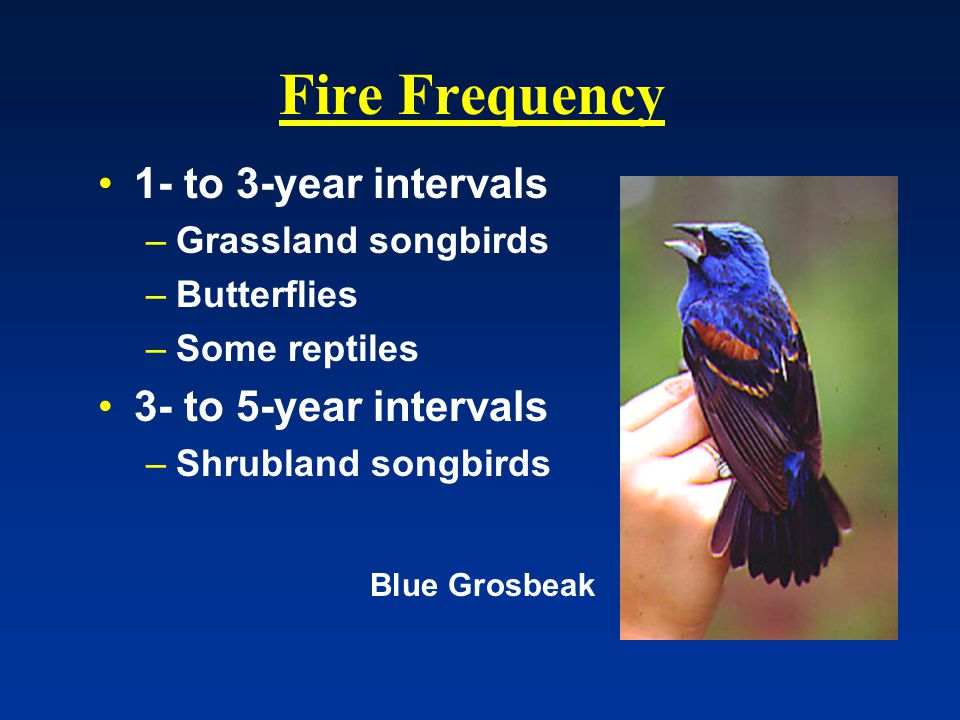 Fire Frequency 1- to 3-year intervals –Grassland songbirds –Butterflies –Some reptiles 3- to 5-year intervals –Shrubland songbirds Blue Grosbeak