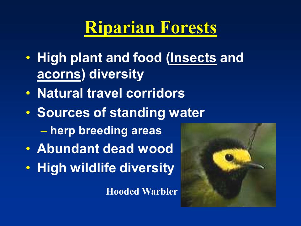 Riparian Forests High plant and food (Insects and acorns) diversity Natural travel corridors Sources of standing water –herp breeding areas Abundant dead wood High wildlife diversity Hooded Warbler