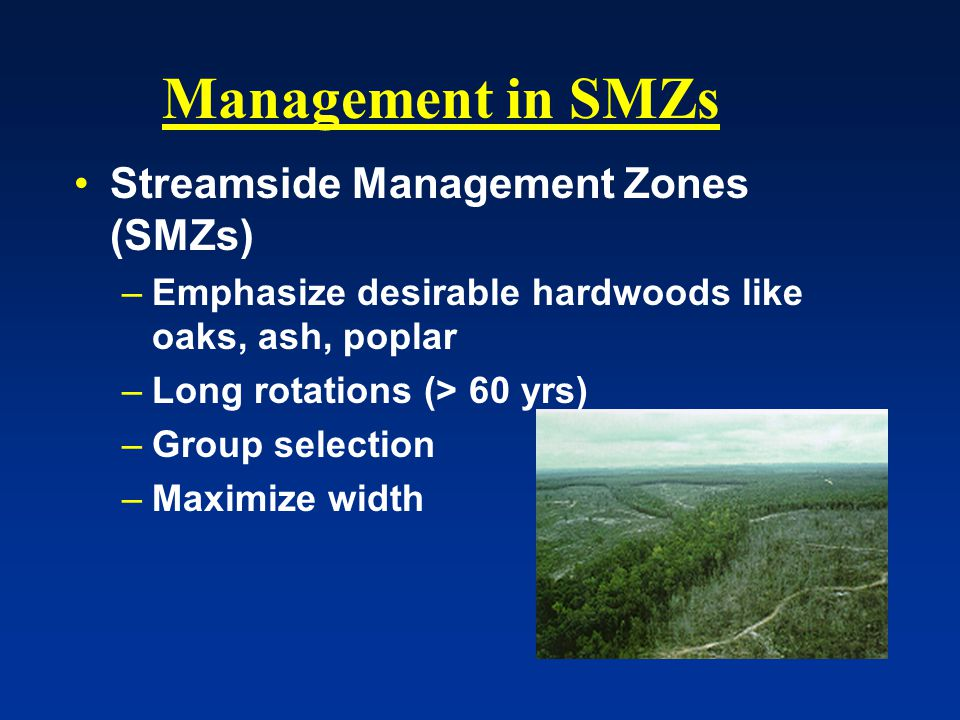 Management in SMZs Streamside Management Zones (SMZs) –Emphasize desirable hardwoods like oaks, ash, poplar –Long rotations (> 60 yrs) –Group selection –Maximize width