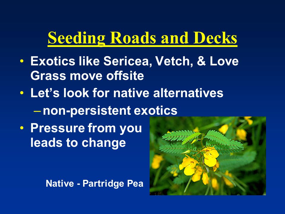 Seeding Roads and Decks Exotics like Sericea, Vetch, & Love Grass move offsite Let's look for native alternatives –non-persistent exotics Pressure from you leads to change Native - Partridge Pea