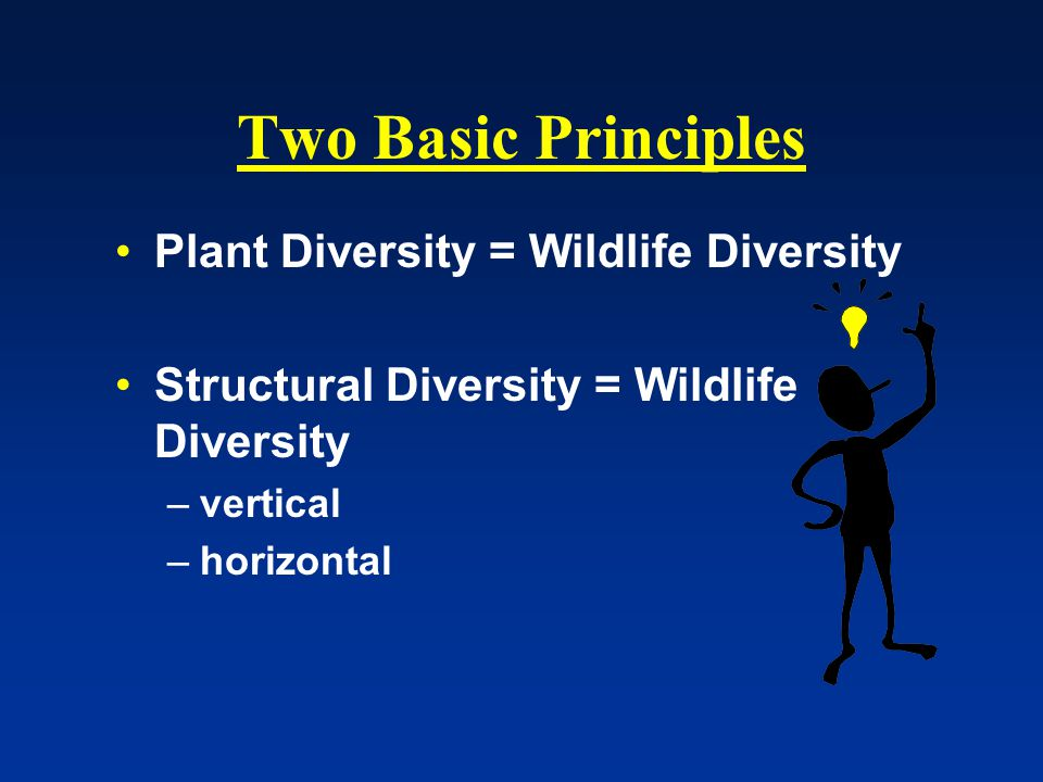 Two Basic Principles Plant Diversity = Wildlife Diversity Structural Diversity = Wildlife Diversity –vertical –horizontal