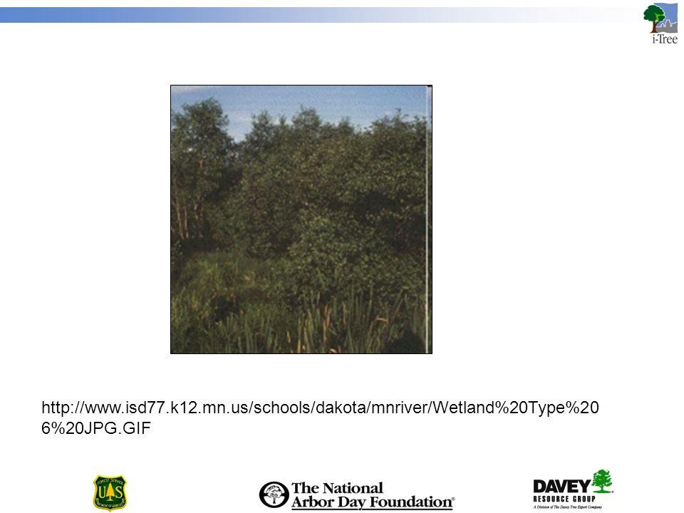 http://www.isd77.k12.mn.us/schools/dakota/mnriver/Wetland%20Type%20 6%20JPG.GIF