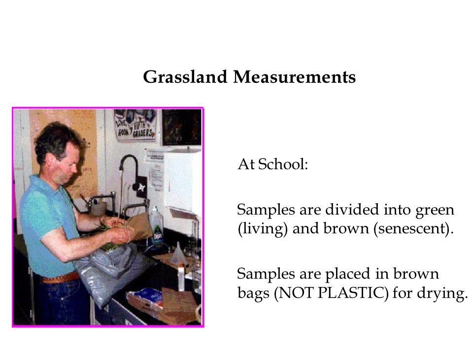 Grassland Measurements At School: Samples are divided into green (living) and brown (senescent).