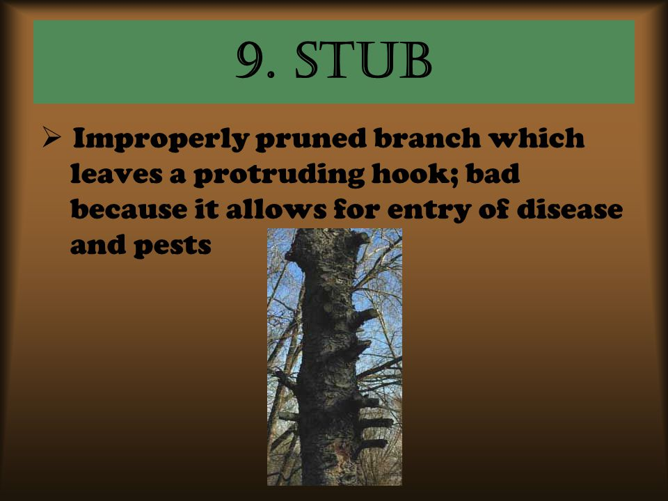 9. Stub  Improperly pruned branch which leaves a protruding hook; bad because it allows for entry of disease and pests