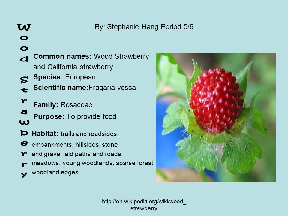 http://en.wikipedia.org/wiki/wood_ strawberry By: Stephanie Hang Period 5/6 Common names: Wood Strawberry and California strawberry Species: European