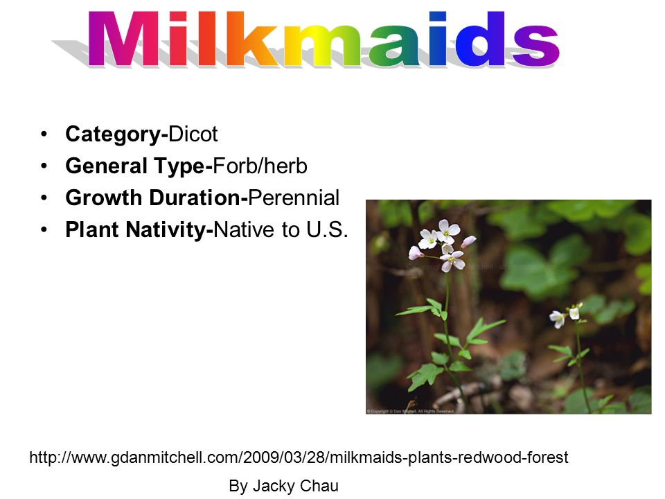 Category-Dicot General Type-Forb/herb Growth Duration-Perennial Plant Nativity-Native to U.S. http://www.gdanmitchell.com/2009/03/28/milkmaids-plants-
