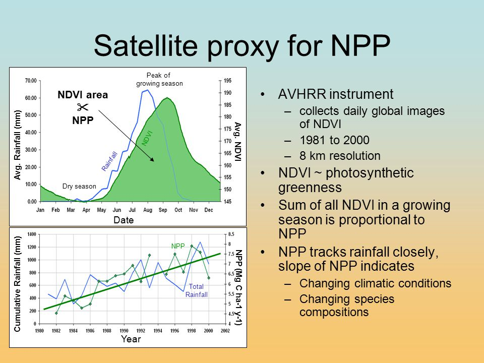 NDVI Year NPP (Mg C ha-1 y-1) Cumulative Rainfall (mm) Total Rainfall NPP Satellite proxy for NPP AVHRR instrument –collects daily global images of NDVI –1981 to 2000 –8 km resolution NDVI ~ photosynthetic greenness Sum of all NDVI in a growing season is proportional to NPP NPP tracks rainfall closely, slope of NPP indicates –Changing climatic conditions –Changing species compositions Average Rainfall in Nimay, Niger Avg.