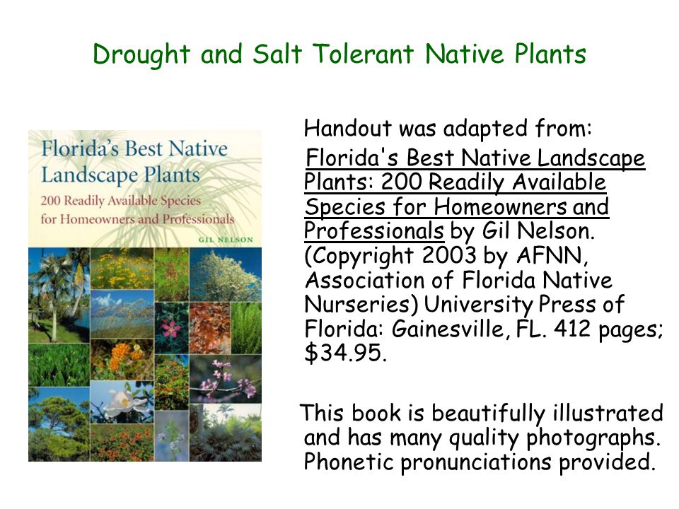 Drought and Salt Tolerant Native Plants Handout was adapted from: Florida s Best Native Landscape Plants: 200 Readily Available Species for Homeowners and Professionals by Gil Nelson.