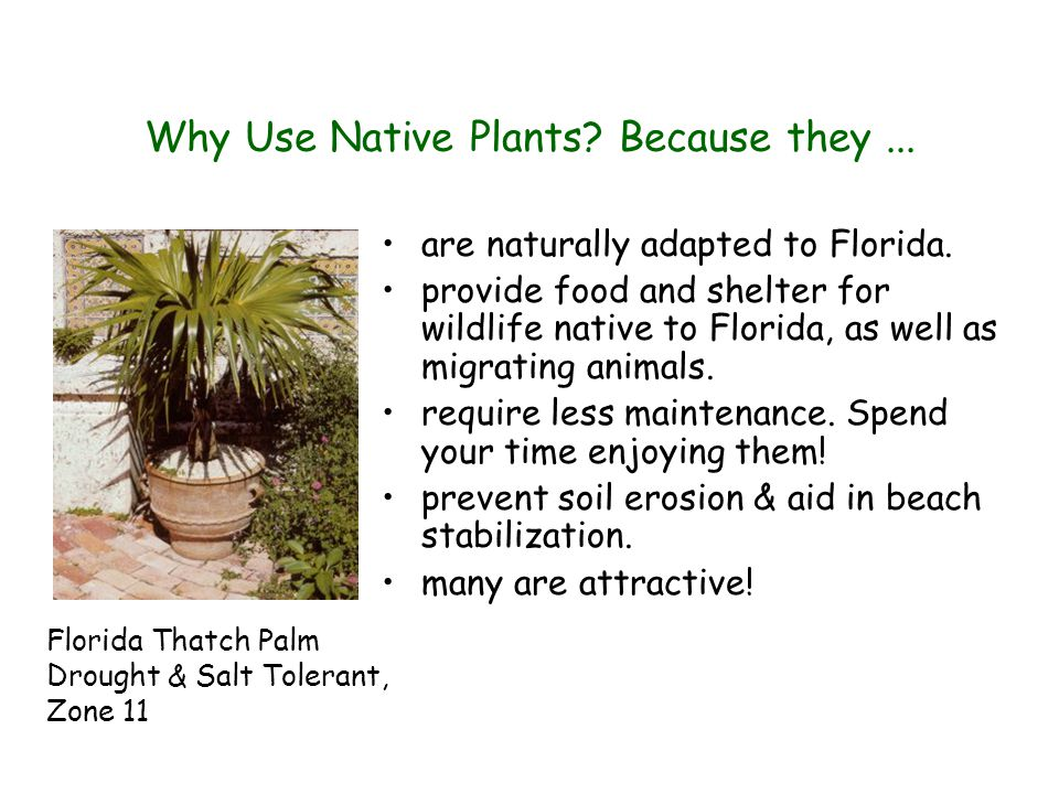 Why Use Native Plants. Because they... are naturally adapted to Florida.