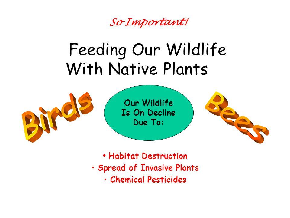 Thousands of years ago … Florida Native Plants grew naturally … Wildlife had plenty to eat.