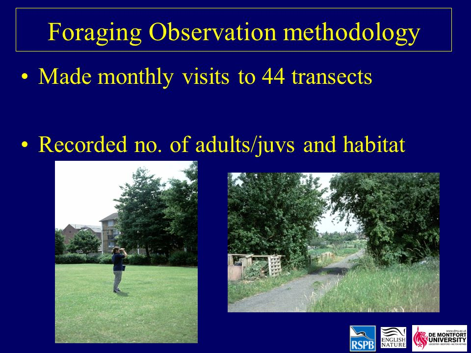 Foraging Observation methodology Made monthly visits to 44 transects Recorded no.