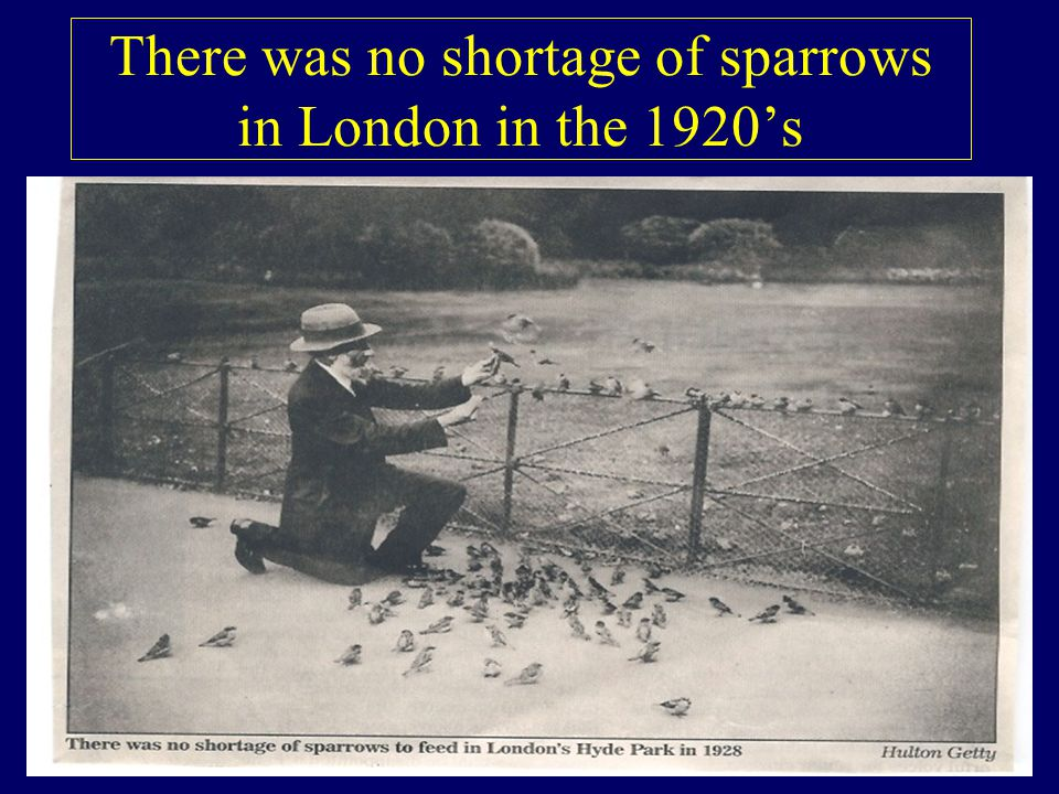 There was no shortage of sparrows in London in the 1920's
