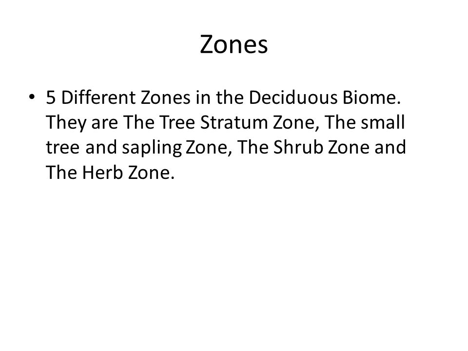 Tree Stratum Zone This zone contains oak trees, beech, maple, chestnut, hickory, elm, basswood, linden, walnut and sweet gum trees.