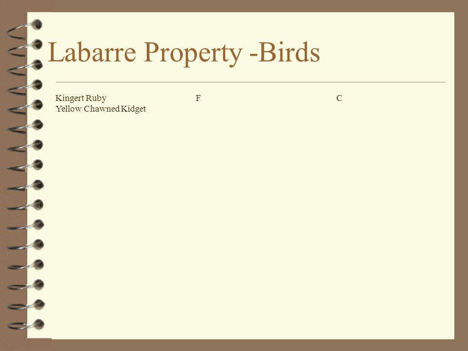 Labarre Property -Birds Kingert RubyFC Yellow Chawned Kidget