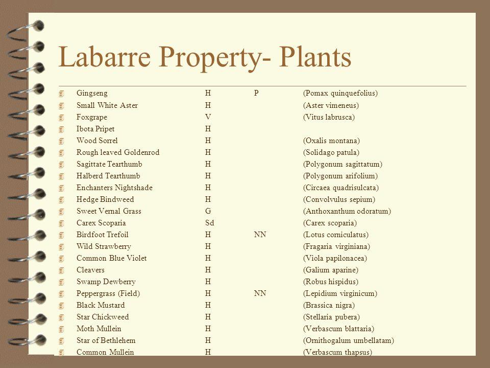 Labarre Property- Plants 4 GingsengHP(Pomax quinquefolius) 4 Small White AsterH(Aster vimeneus) 4 FoxgrapeV(Vitus labrusca) 4 Ibota PripetH 4 Wood SorrelH(Oxalis montana) 4 Rough leaved GoldenrodH(Solidago patula) 4 Sagittate TearthumbH(Polygonum sagittatum) 4 Halberd TearthumbH(Polygonum arifolium) 4 Enchanters NightshadeH(Circaea quadrisulcata) 4 Hedge BindweedH(Convolvulus sepium) 4 Sweet Vernal GrassG(Anthoxanthum odoratum) 4 Carex ScopariaSd(Carex scoparia) 4 Birdfoot TrefoilHNN (Lotus corniculatus) 4 Wild StrawberryH(Fragaria virginiana) 4 Common Blue VioletH(Viola papilonacea) 4 CleaversH(Galium aparine) 4 Swamp DewberryH(Robus hispidus) 4 Peppergrass (Field)HNN(Lepidium virginicum) 4 Black MustardH(Brassica nigra) 4 Star ChickweedH(Stellaria pubera) 4 Moth MulleinH(Verbascum blattaria) 4 Star of BethlehemH(Ornithogalum umbellatam) 4 Common MulleinH(Verbascum thapsus)