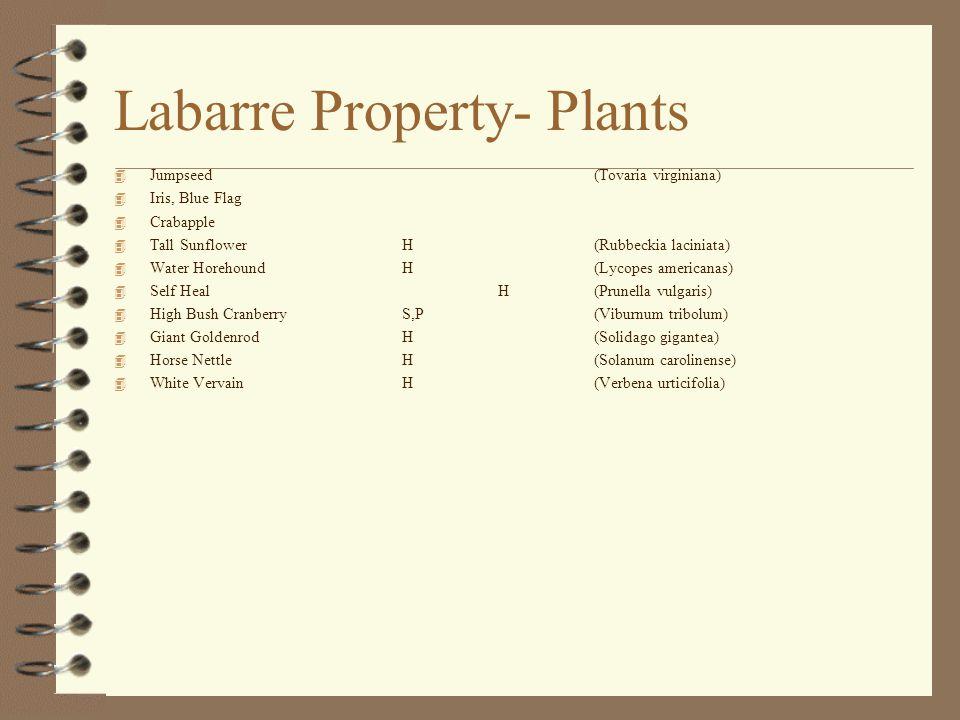 Labarre Property- Plants 4 Jumpseed (Tovaria virginiana) 4 Iris, Blue Flag 4 Crabapple 4 Tall SunflowerH(Rubbeckia laciniata) 4 Water HorehoundH(Lycopes americanas) 4 Self HealH(Prunella vulgaris) 4 High Bush CranberryS,P(Viburnum tribolum) 4 Giant GoldenrodH(Solidago gigantea) 4 Horse NettleH(Solanum carolinense) 4 White VervainH(Verbena urticifolia)