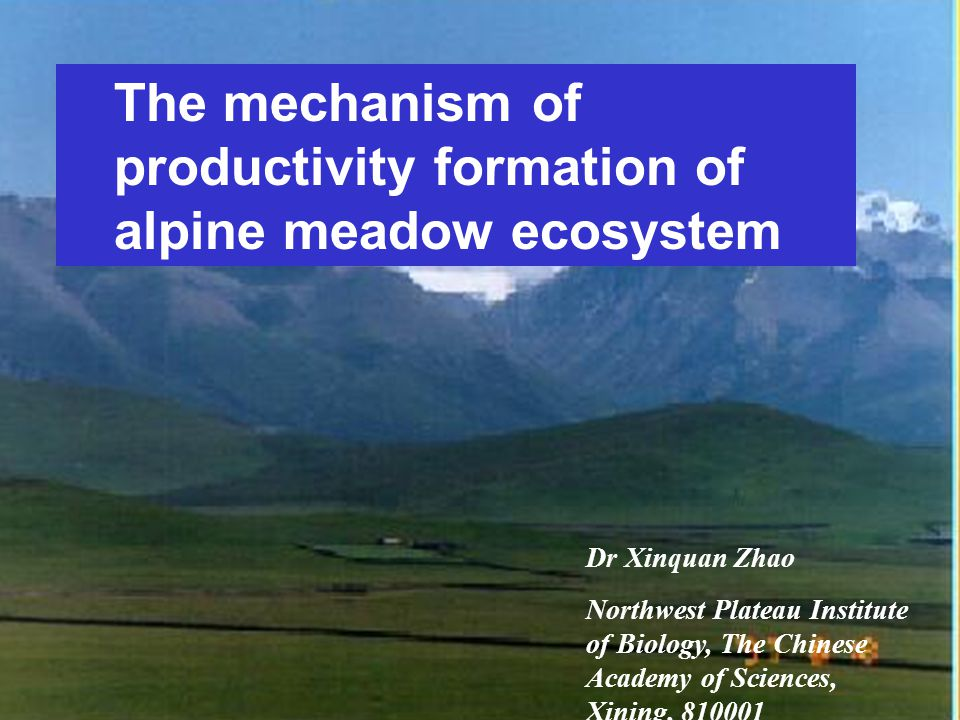 The mechanism of productivity formation of alpine meadow ecosystem Dr Xinquan Zhao Northwest Plateau Institute of Biology, The Chinese Academy of Scie