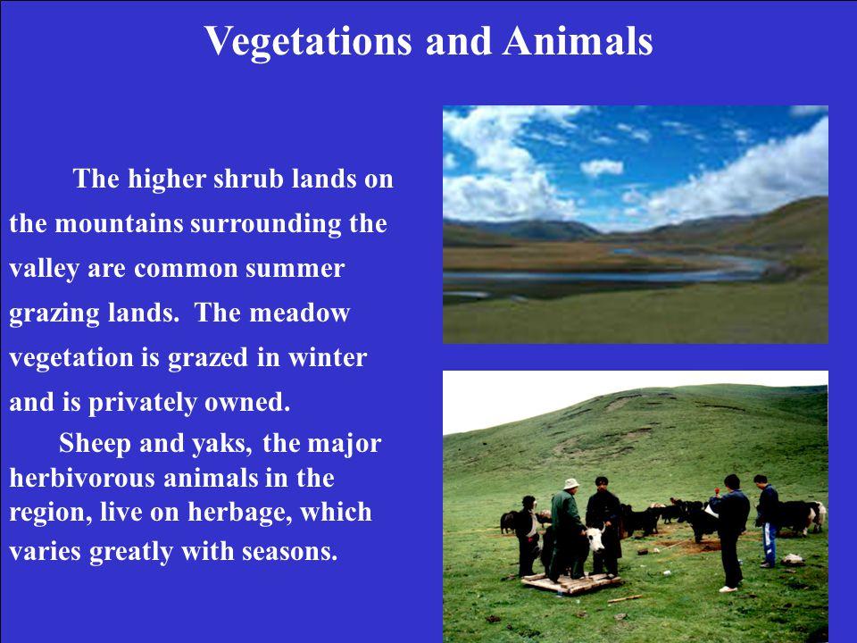 Soil Temperature – Treatment Effects Growing Season, 3 Sites * * (Klein, Xin-quan, Harte, unpublished data) MEADOWSHRUB