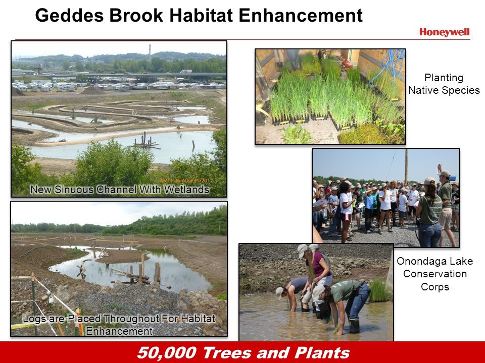 6HONEYWELL - CONFIDENTIAL File Number Geddes Brook Habitat Enhancement 50,000 Trees and Plants