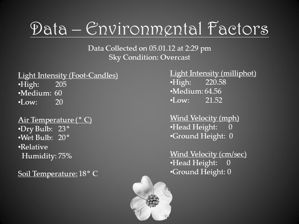 Data – Environmental Factors Data Collected on 05.01.12 at 2:29 pm Sky Condition: Overcast Light Intensity (Foot-Candles) High: 205 Medium: 60 Low: 20 Air Temperature (° C) Dry Bulb: 23° Wet Bulb: 20° Relative Humidity: 75% Soil Temperature: 18° C Light Intensity (milliphot) High: 220.58 Medium: 64.56 Low: 21.52 Wind Velocity (mph) Head Height: 0 Ground Height: 0 Wind Velocity (cm/sec) Head Height: 0 Ground Height: 0
