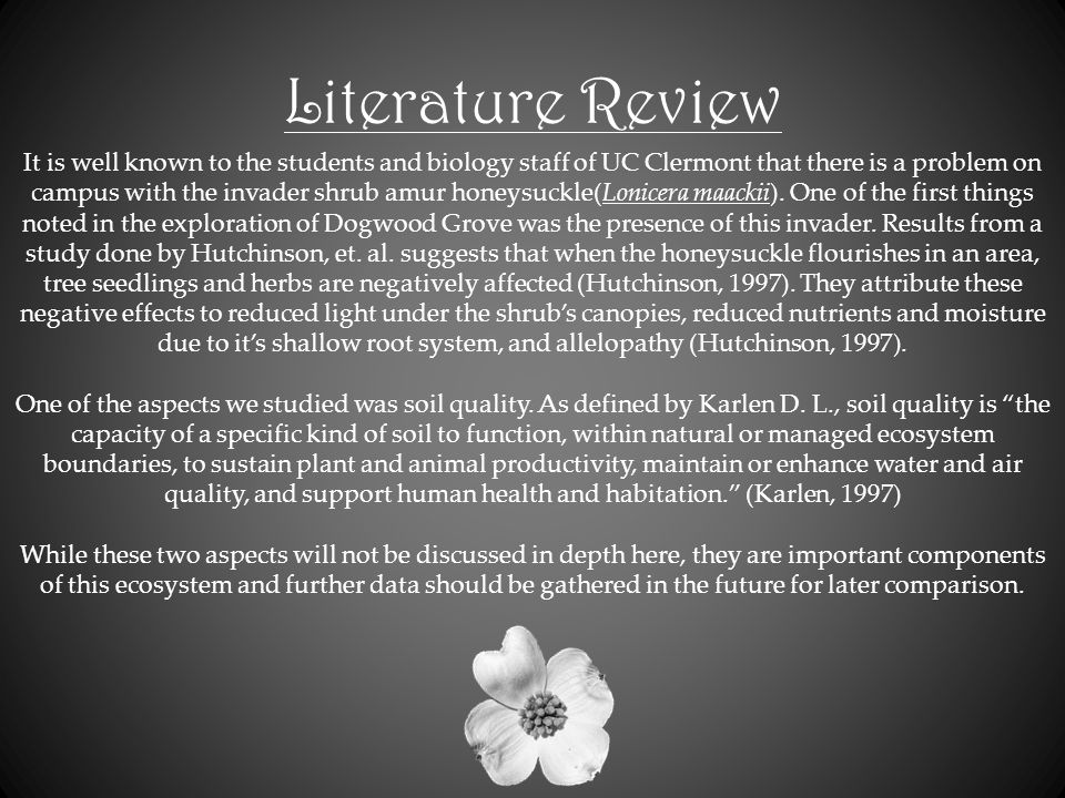 Literature Review It is well known to the students and biology staff of UC Clermont that there is a problem on campus with the invader shrub amur honeysuckle(Lonicera maackii).