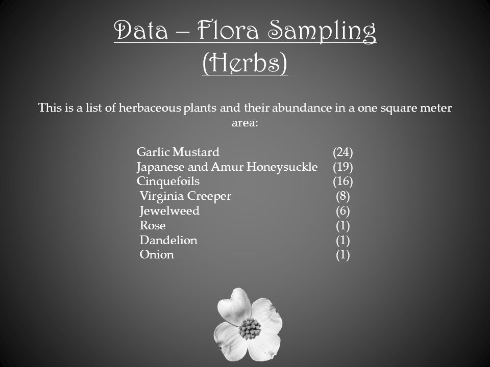 Data – Flora Sampling (Herbs) This is a list of herbaceous plants and their abundance in a one square meter area: Garlic Mustard(24) Japanese and Amur Honeysuckle(19) Cinquefoils(16) Virginia Creeper(8) Jewelweed(6) Rose(1) Dandelion(1) Onion(1)