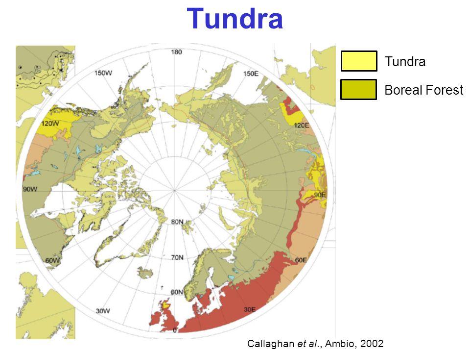 Tundra Boreal Forest Callaghan et al., Ambio, 2002