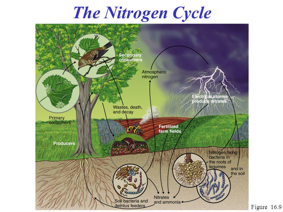 The Nitrogen Cycle Figure 16.9