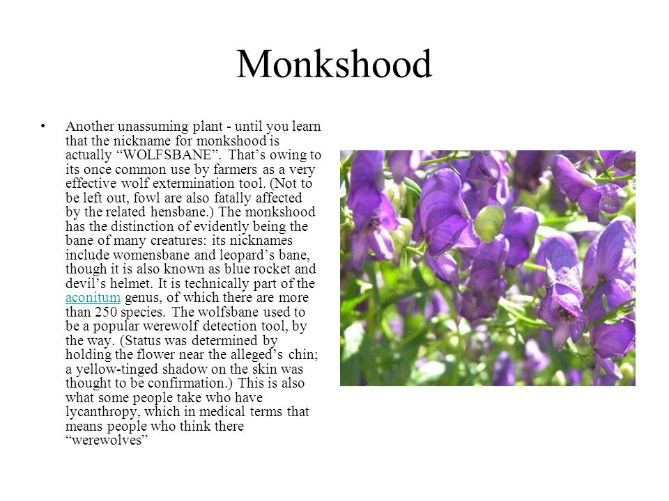 """Monkshood Another unassuming plant - until you learn that the nickname for monkshood is actually """"WOLFSBANE"""". That's owing to its once common use by f"""