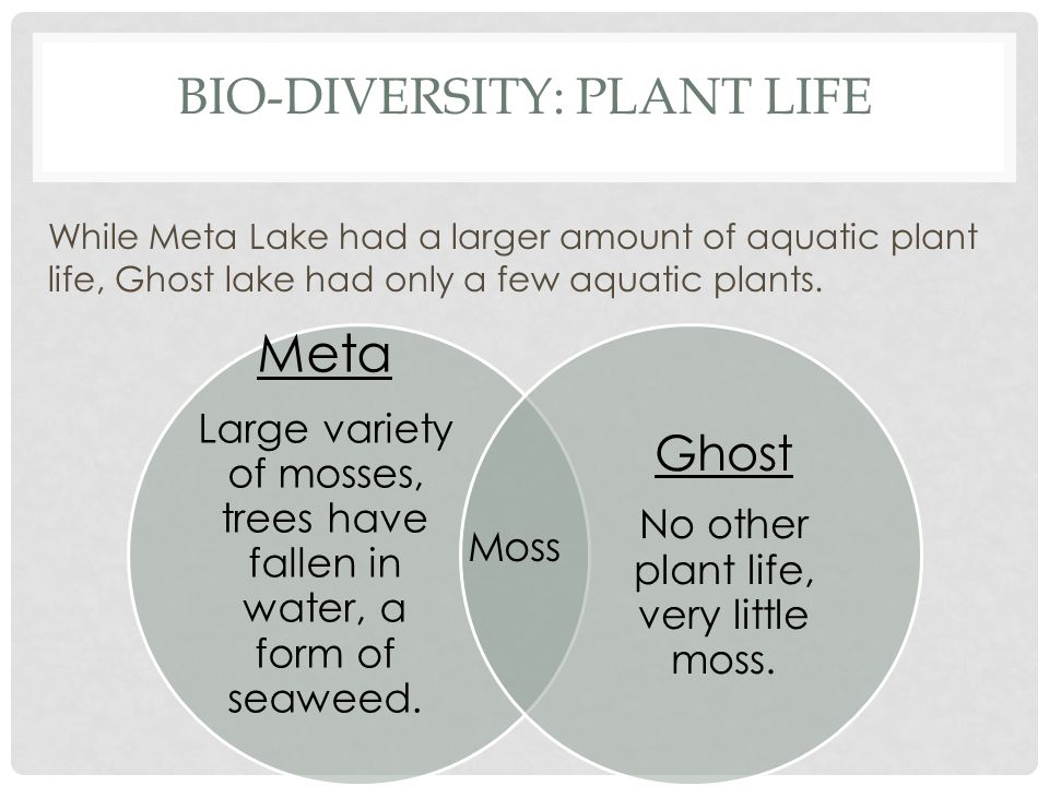 BIO-DIVERSITY: PLANT LIFE While Meta Lake had a larger amount of aquatic plant life, Ghost lake had only a few aquatic plants.