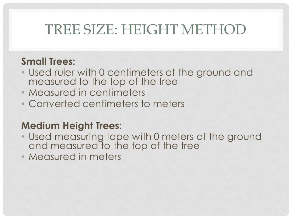 TREE SIZE: HEIGHT METHOD Small Trees: Used ruler with 0 centimeters at the ground and measured to the top of the tree Measured in centimeters Converted centimeters to meters Medium Height Trees: Used measuring tape with 0 meters at the ground and measured to the top of the tree Measured in meters
