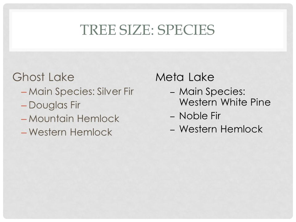 TREE SIZE: SPECIES Ghost Lake – Main Species: Silver Fir – Douglas Fir – Mountain Hemlock – Western Hemlock Meta Lake – Main Species: Western White Pine – Noble Fir – Western Hemlock