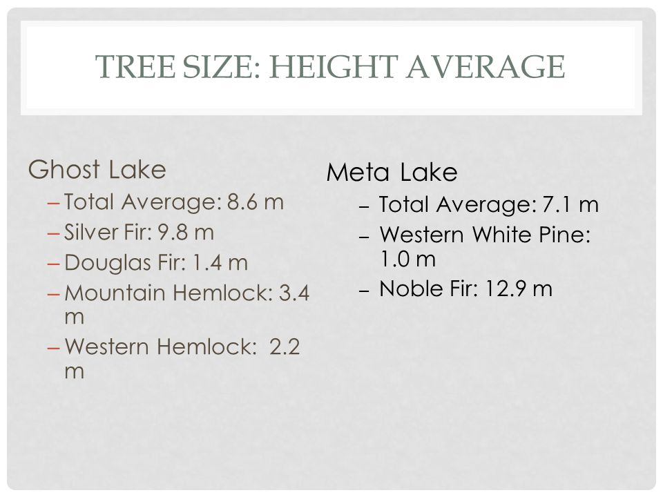 TREE SIZE: HEIGHT AVERAGE Ghost Lake – Total Average: 8.6 m – Silver Fir: 9.8 m – Douglas Fir: 1.4 m – Mountain Hemlock: 3.4 m – Western Hemlock: 2.2 m Meta Lake – Total Average: 7.1 m – Western White Pine: 1.0 m – Noble Fir: 12.9 m