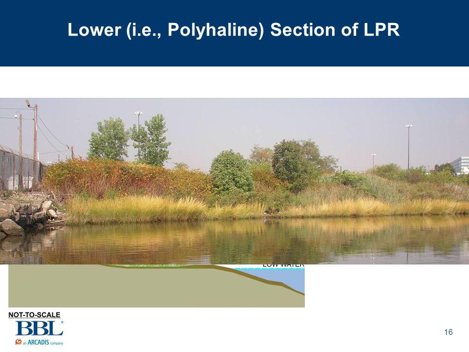 16 Lower (i.e., Polyhaline) Section of LPR
