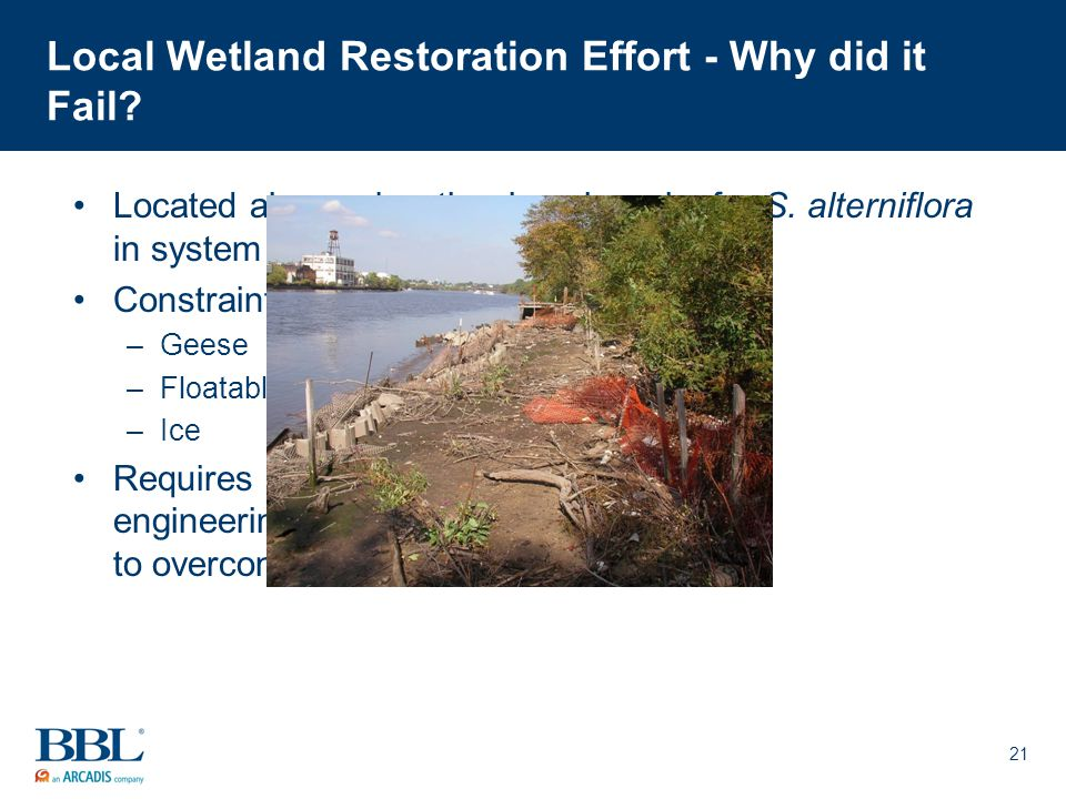 21 Local Wetland Restoration Effort - Why did it Fail? Located above elevation benchmarks for S. alterniflora in system Constraints from outside impac