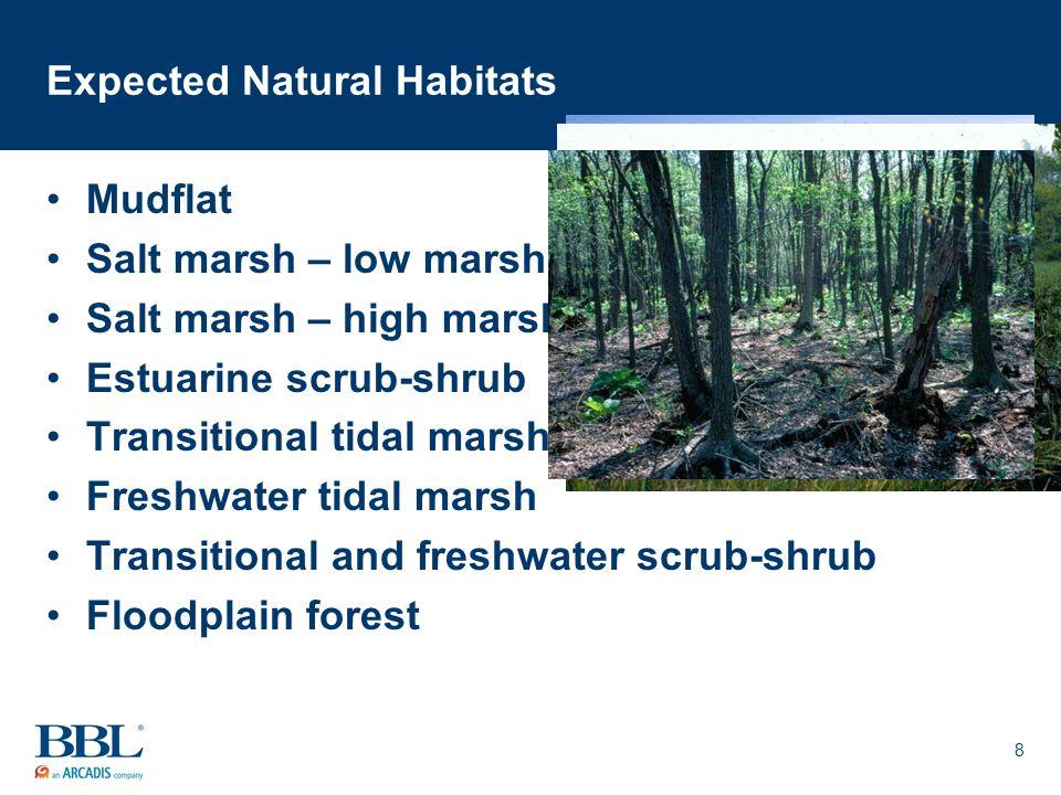 8 Expected Natural Habitats Mudflat Salt marsh – low marsh Salt marsh – high marsh Estuarine scrub-shrub Transitional tidal marsh Freshwater tidal mar