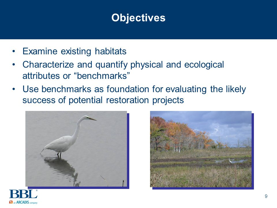 9 Objectives Examine existing habitats Characterize and quantify physical and ecological attributes or benchmarks Use benchmarks as foundation for evaluating the likely success of potential restoration projects