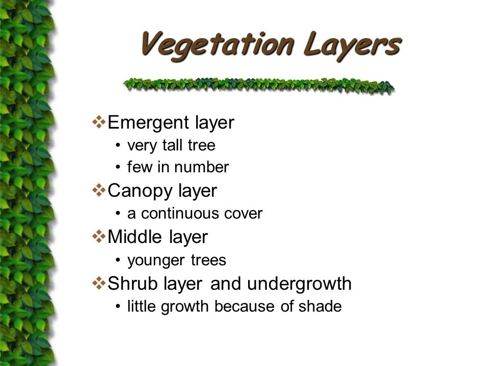 Vegetation Structure Emergents LayerCanopy LayerMiddle Layer Shrub Layer and Understorey
