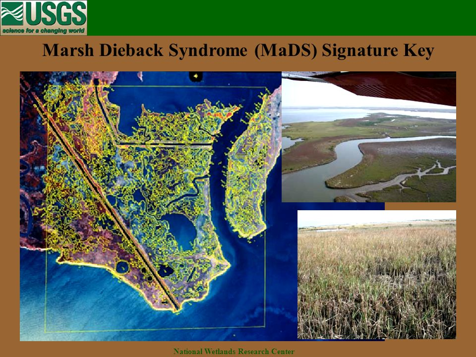 National Wetlands Research Center Marsh Dieback Syndrome (MaDS) Signature Key