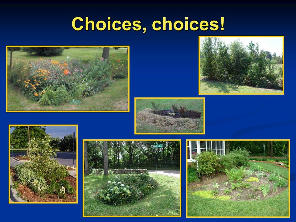Choices, choices!