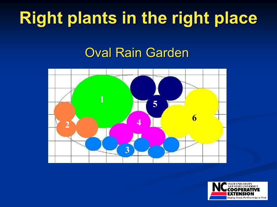 Right plants in the right place Oval Rain Garden 1 2 3 4 5 6