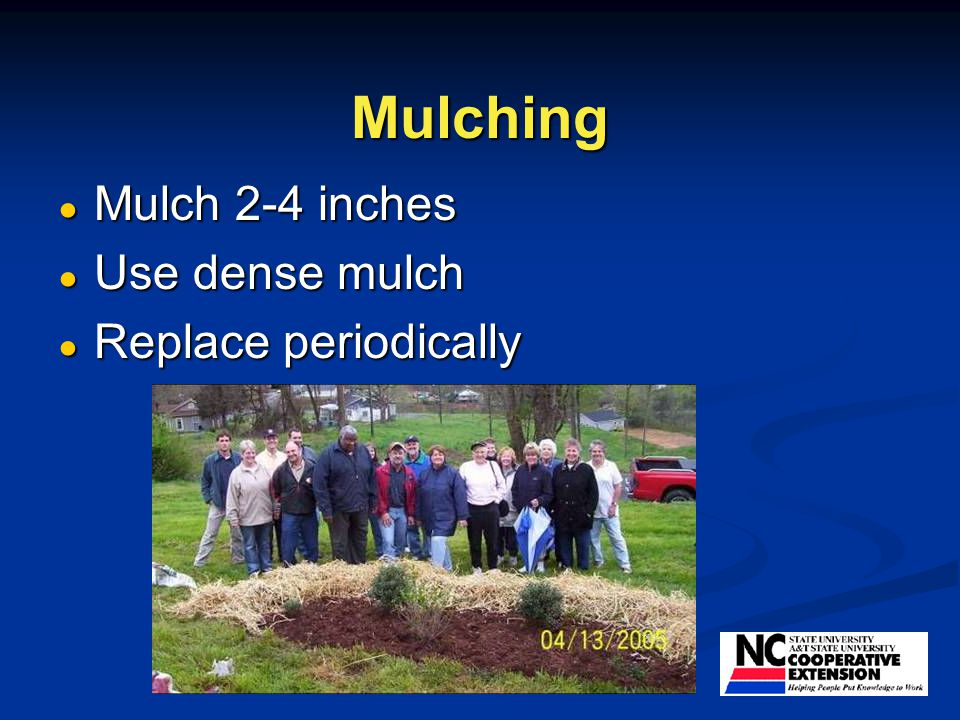 Mulching ● Mulch 2-4 inches ● Use dense mulch ● Replace periodically