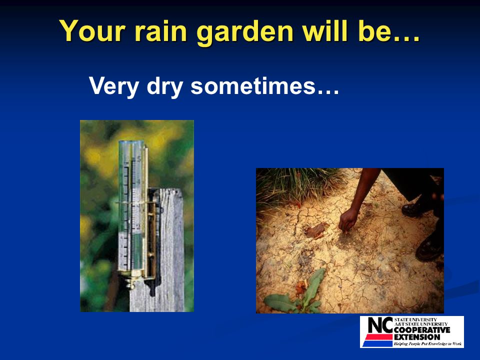 Your rain garden will be… Very dry sometimes…