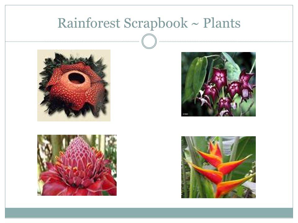 Rainforest Scrapbook ~ Plants