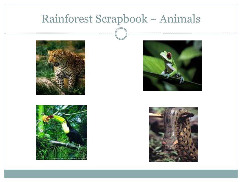 Rainforest Scrapbook ~ Animals