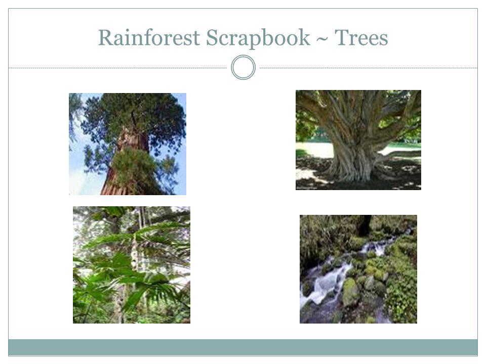 Rainforest Scrapbook ~ Trees