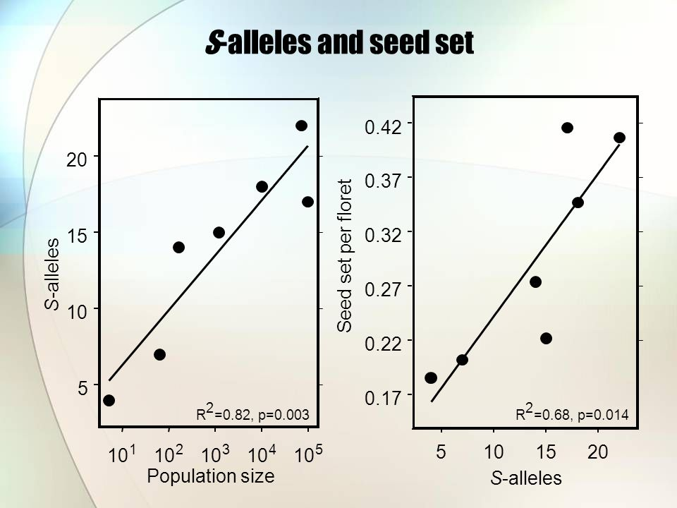 S-alleles and seed set 10 1 2 3 4 5 Population size 5 10 15 20 S-alleles R 2 =0.82, p=0.003 5101520 S-alleles 0.17 0.22 0.27 0.32 0.37 0.42 Seed set per floret R 2 =0.68, p=0.014