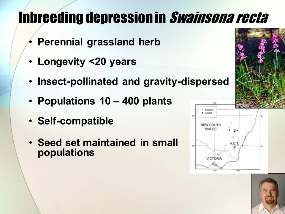 Inbreeding depression in Swainsona recta Perennial grassland herb Longevity <20 years Insect-pollinated and gravity-dispersed Populations 10 – 400 pla