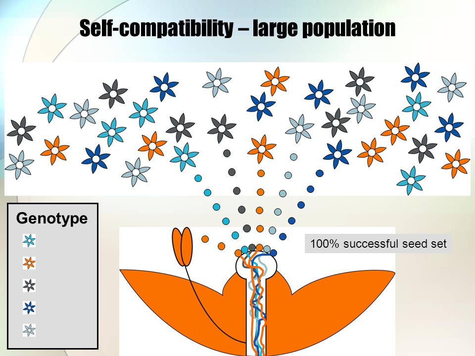 Self-compatibility – large population Genotype 100% successful seed set