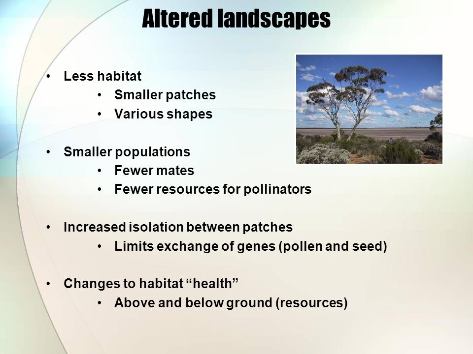 Altered landscapes Less habitat Smaller patches Various shapes Smaller populations Fewer mates Fewer resources for pollinators Increased isolation between patches Limits exchange of genes (pollen and seed) Changes to habitat health Above and below ground (resources)